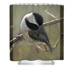 Chickadee Early Bird I Shower Curtain by Debbie Portwood