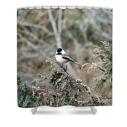 Shower Curtain featuring the photograph Chickadee In Cedar by Brenda Brown