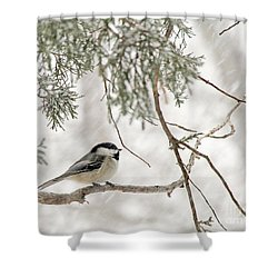 Chickadee In Snowstorm Shower Curtain