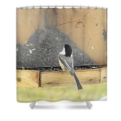 Chickadee Eating Lunch Shower Curtain