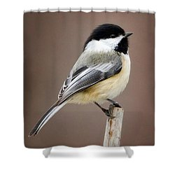 Chickadee Square Shower Curtain