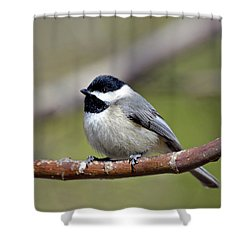 Chickadee Shower Curtain by Susan Leggett