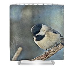 Chickadee With Texture Shower Curtain