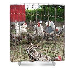 Chicken Coop. Shower Curtain
