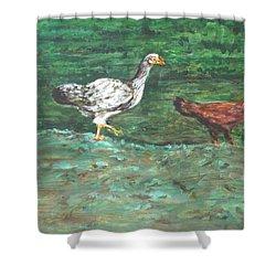 Chicks Shower Curtain by Usha Shantharam