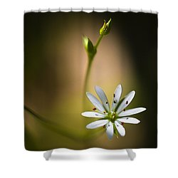 Chickweed Blossom And Bud Shower Curtain