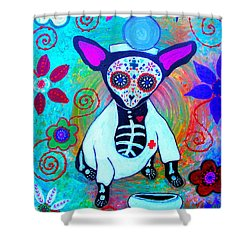 Chihuahua Doctor Shower Curtain by Pristine Cartera Turkus