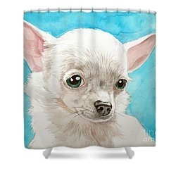 Chihuahua Dog White Shower Curtain