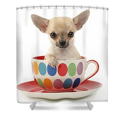 Chihuahua In Cup Dp684 Shower Curtain by Greg Cuddiford