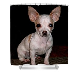 Shower Curtain featuring the photograph Chihuahua Puppy by Maria Urso