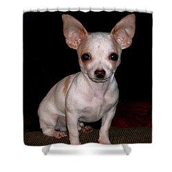 Chihuahua Puppy Shower Curtain by Maria Urso