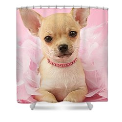Chihuahua With Feather Boa Shower Curtain by Greg Cuddiford