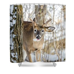 Shower Curtain featuring the photograph Childish Buck by Steven Santamour