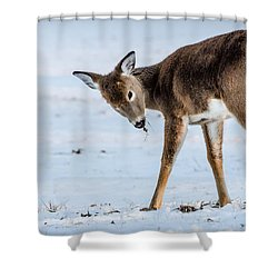 Shower Curtain featuring the photograph Children Eat Free by Steven Santamour