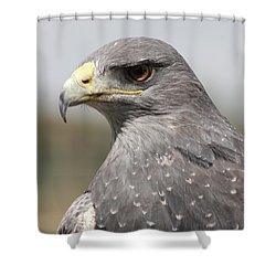 Chilean Eagle Shower Curtain
