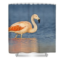 Chilean Flamingo Shower Curtain by Ronald Kamphius