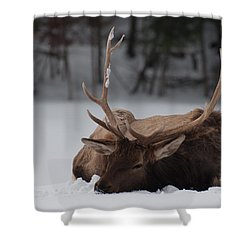 Shower Curtain featuring the photograph Chillin' by Bianca Nadeau