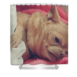 Chillin Shower Curtain by Laurie Search