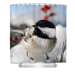 Chilly Chickadee Shower Curtain by Christina Rollo