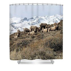 Chimney Rock Rams Shower Curtain