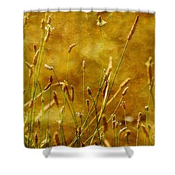 Chimney Sweeps Shower Curtain by Lois Bryan