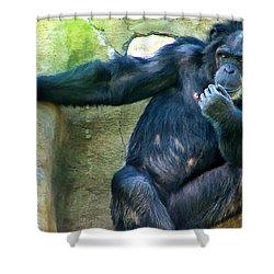 Shower Curtain featuring the photograph Chimp 1 by Dawn Eshelman