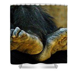 Chimpanzee Feet Shower Curtain
