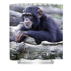 Chimpanzee Playing Shower Curtain by Shoal Hollingsworth