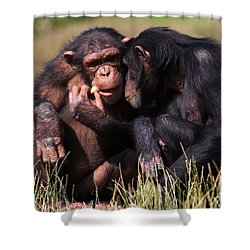 Chimpanzees Eating A Carrot Shower Curtain by Nick  Biemans