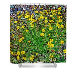 Chinchweed In Big Bend National Park-texas Shower Curtain