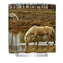 Chincoteague Gold Shower Curtain