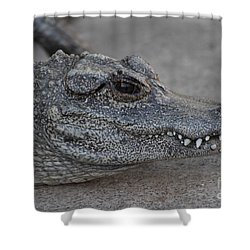 Chinese Alligator Shower Curtain by Ruth Jolly