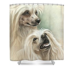 Chinese Crested Shower Curtain by Tobiasz Stefaniak