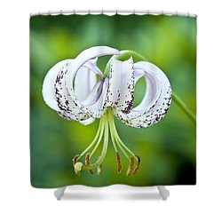 Chinese Lily Shower Curtain by Lana Enderle