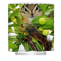 Shower Curtain featuring the photograph Chip Or Dale by Barbara Chichester