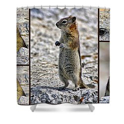 Chipmunk Collage Shower Curtain