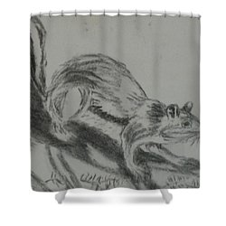 Shower Curtain featuring the drawing Chipmunk On The Prowl by Thomasina Durkay