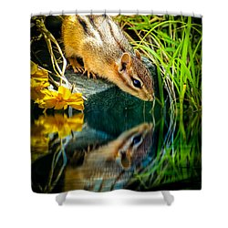 Chipmunk Reflection Shower Curtain