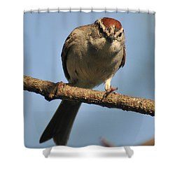 Chipping Sparrow 265 Shower Curtain