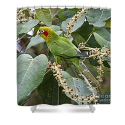 Chiriqui Conure 2 Shower Curtain by Heiko Koehrer-Wagner