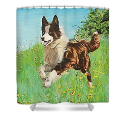 Chocolate Border Collie In Meadow Shower Curtain