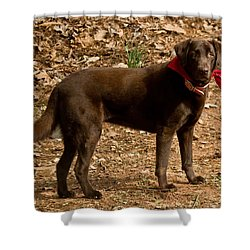 Shower Curtain featuring the photograph Chocolate Lab by Robert L Jackson