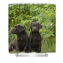 Chocolate Labrador Retriever Puppies Shower Curtain by Linda Freshwaters Arndt