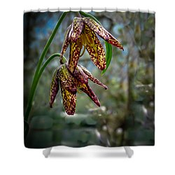 Chocolate Lily Shower Curtain by Robert Bales