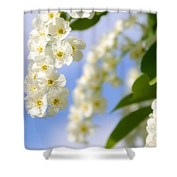 Choke Cherry In Bloom Shower Curtain by Gary Whitton