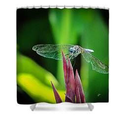 Shower Curtain featuring the photograph Chomped Wing Squared by TK Goforth