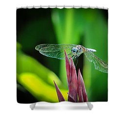 Chomped Wing Shower Curtain by TK Goforth
