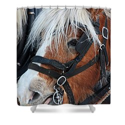 Shower Curtain featuring the photograph Chomping On The Bit by Alyce Taylor
