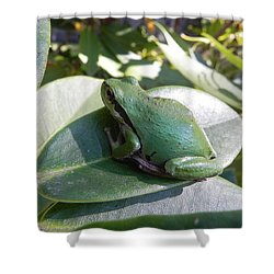 Shower Curtain featuring the photograph Chorus Frog On A Rhodo by Cheryl Hoyle
