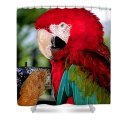 Chowtime Shower Curtain by Karen Wiles
